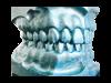 Modell-Zähne Unsere Leistungen im Überblick